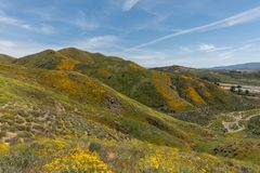 Beautiful superbloom vista in the Walker Canyon mountain range near Lake Elsinore. Southern California, with slopes covered in wild poppies stock photography