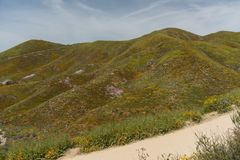 Beautiful superbloom vista in the Walker Canyon mountain range near Lake Elsinore. Southern California, with slopes covered in wild poppies royalty free stock photo