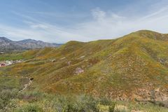 Beautiful superbloom vista in the Walker Canyon mountain range near Lake Elsinore. Southern California, with slopes covered in wild poppies stock photo