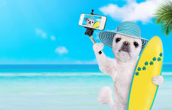 Beautiful surfer dog on the beach taking a selfie together with a smartphone. Stock Photo