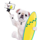 Beautiful surfer dog on the beach taking a selfie together with a smartphone. Royalty Free Stock Photography