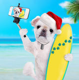 Beautiful surfer dog in red Christmas hat on the beach . Stock Photos