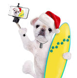 Beautiful surfer dog in red Christmas hat on the beach taking a selfie together with a smartphone. Stock Photos