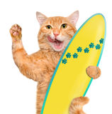 Beautiful surfer red cat on the beach . Royalty Free Stock Photo