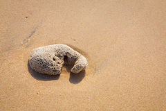 Beautiful surfing tropical sand beach detail Royalty Free Stock Photos