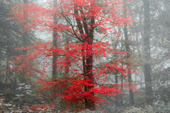Beautiful surreal alternate color fantasy Autumn Fall forest lan Royalty Free Stock Photos