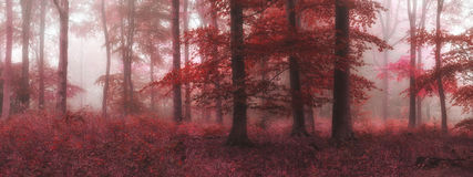 Beautiful surreal alternate color fantasy Autumn Fall forest lan Royalty Free Stock Photo