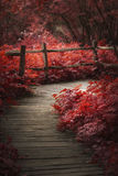 Beautiful surreal red landscape image of wooden boardwalk throughforest in Spring royalty free stock images