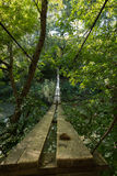 Beautiful suspension bridge in the forest stock photography