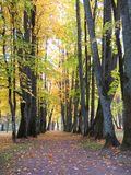 Path in park and old autumn trees, Lithuania Stock Photos