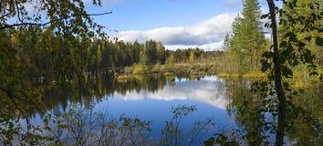 Beautiful swamp in nothern taiga. In autumn season in Karelia Royalty Free Stock Photos