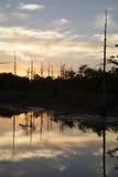 Beautiful Swamp Stock Photography