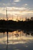 Beautiful Swamp Royalty Free Stock Photography