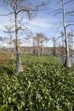 Beautiful Swamp Stock Photos