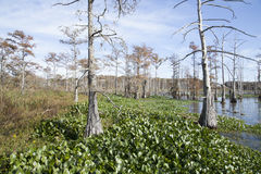 Beautiful Swamp Stock Images