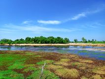 Beautiful swampy with blue sky background. royalty free stock photography