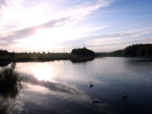 Swans and lake in sunset time, Lithuania royalty free stock photo