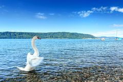 Lake Constance Bodensee Stock Images