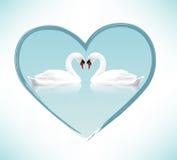 Beautiful Swans Stock Photos
