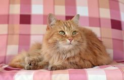 Beautiful sweet cat Royalty Free Stock Images