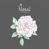 Beautiful sweet little rose Royalty Free Stock Image