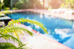 Beautiful Swimming Pool Tropical Resort Blured. Beautiful Swimming Pool Tropical Resort Palm Tree Branches Phuket Thailand Blurred Background Toned Royalty Free Stock Photo
