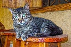 Beautiful tabby cat royalty free stock photography