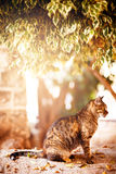 Beautiful tabby cat sitting under the tree Stock Images