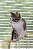 A beautiful tabby kitten playing on a bird cage Royalty Free Stock Image