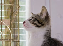 A beautiful tabby kitten playing on a bird cage Stock Photos
