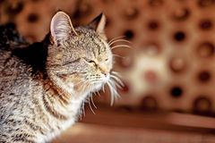 Beautiful tabby looks at camera, close-up. Compassionate look stock images