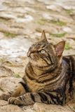 Beautiful tabby street cat lying down on the ground, at St. Julian`s, Malta. Beautiful female tabby street cat lying on the ground, at St. Julian`s, Malta Stock Image