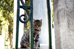 Beautiful tabby / striped stray cat. Royalty Free Stock Photos