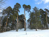 Pine on the hill Royalty Free Stock Photos