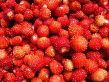 Red ripe strawberries pattern. Beautiful tasty ripe strawberries in summer Royalty Free Stock Photo