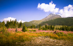 A beautiful Tatry mountain landscape in a sunny day. In Slovakia stock image