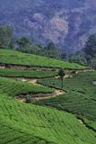Beautiful Tea Estate hill top scenery at Munnar stock photos