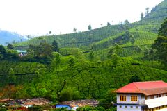 Beautiful tea garden with house. Beautiful tea garden house nature southindia greenery teaplantation hill travel leisure outdoor vacation stock image