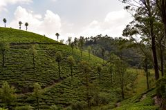 Beautiful tea garden India. Landscape nature teaplantation royalty free stock images