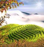 Beautiful tea garden w nice maple stock image