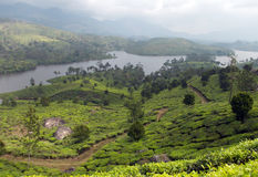 Beautiful tea plantations on the banks of a river. Majestic green hills with very steep terracing which creates the perfect environment for growing tea.  This Royalty Free Stock Images