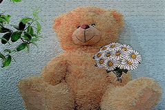 Beautiful teddy bear with a bouquet of white daisies royalty free stock images