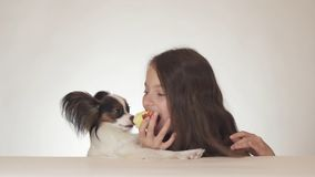Beautiful teen girl and dog Continental Toy Spaniel Papillon eating tasty fresh red apple on white background Stock Image