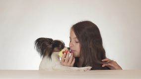 Beautiful teen girl and dog Continental Toy Spaniel Papillon eating tasty fresh red apple on white background Royalty Free Stock Images