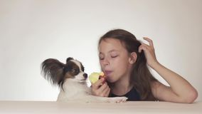 Beautiful teen girl and dog Continental Toy Spaniel Papillon eating tasty fresh red apple on white background stock stock footage