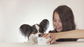 Beautiful teen girl gives a delicious gift to a dog Continental Toy Spaniel Papillon on white background Royalty Free Stock Photo