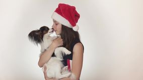 Beautiful teen girl in a Santa Claus cap and dog Continental Toy Spaniel Papillon joyfully kissing and fooling around on stock footage