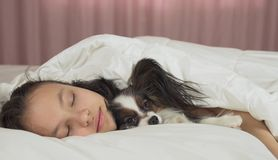 Beautiful teen girl sleeping sweetly in bed with Papillon dog stock photography