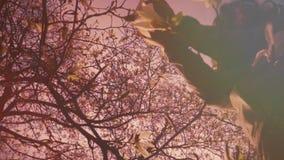 A beautiful teenage girl views magnolia flowers. Spring time stock video