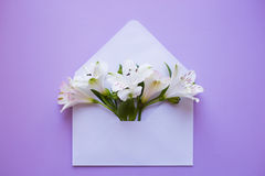Beautiful tender bouquet of Alstroemeria in envelope on lilac ba Royalty Free Stock Photography